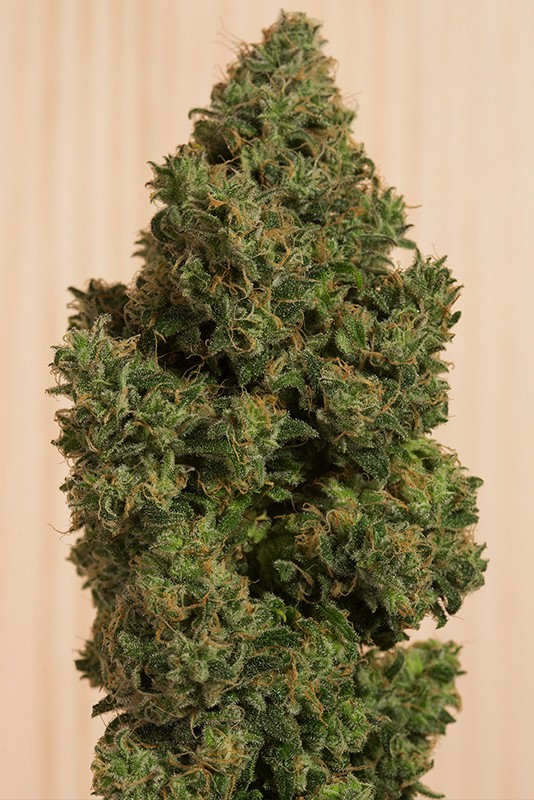 Blue Dream CBD Feminised Seeds