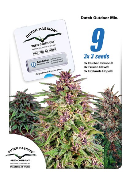 Dutch Outdoor Mix Feminised Seeds - 9