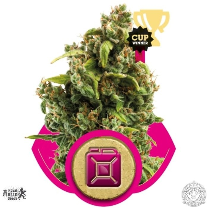 Sour Diesel Feminised Seeds from Royal Queen Seeds