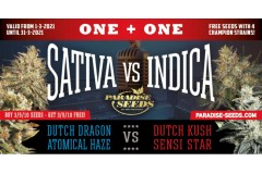 1+1 March Promo Sativa vs Indica!